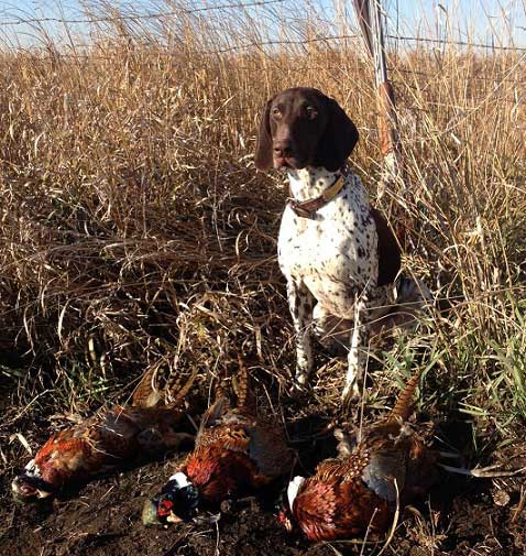 DK with Pheasants